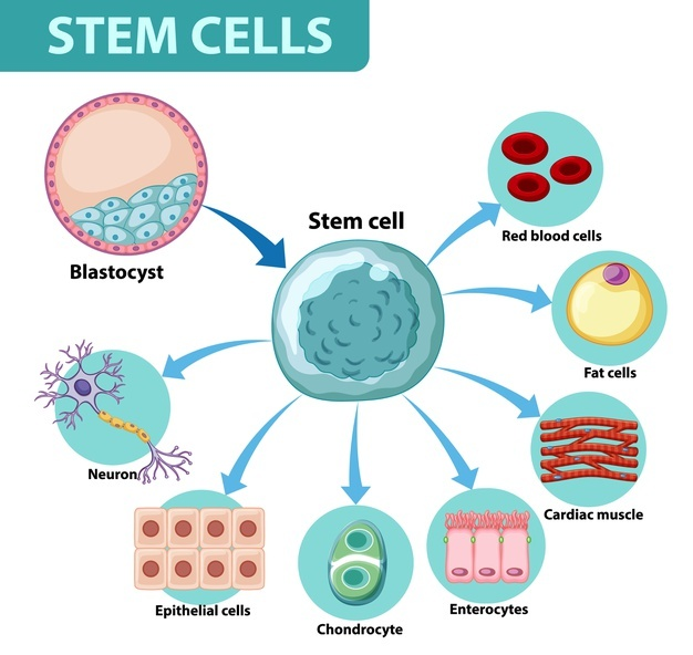 Stem Cell Technology for Skin Treatment