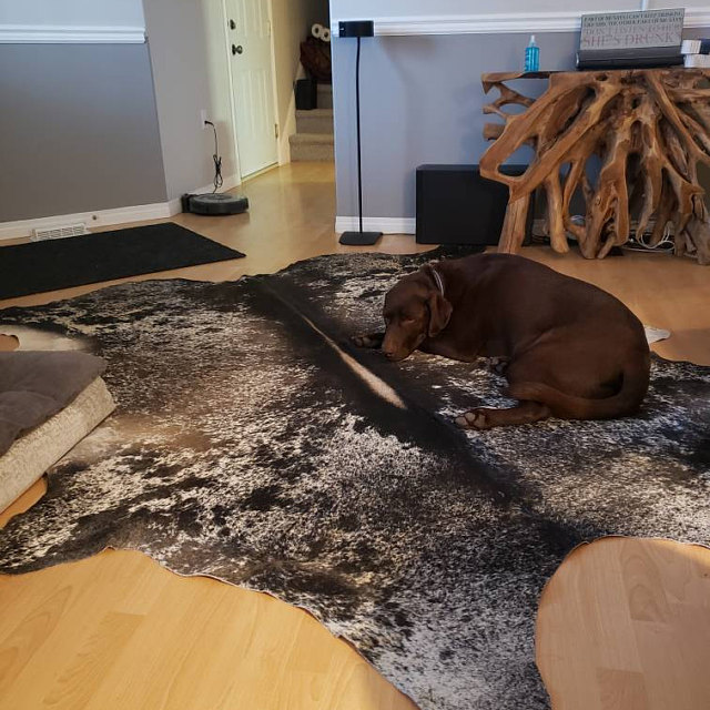 Our shipping is amazing Ontario can have cowhide rug in living room the next day exactly as pictured and you will love the top quality cow hide.