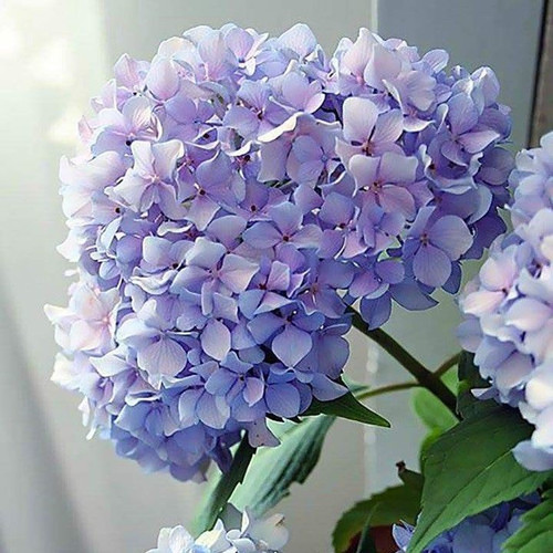 Happy Hydrangea Paint By Number