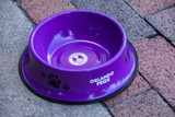 Orlando Pride Pet Bowl