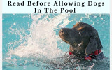 Read Before Allowing Dogs in the Pool