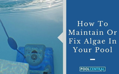 How To Maintain Or Fix Algae In Your Pool