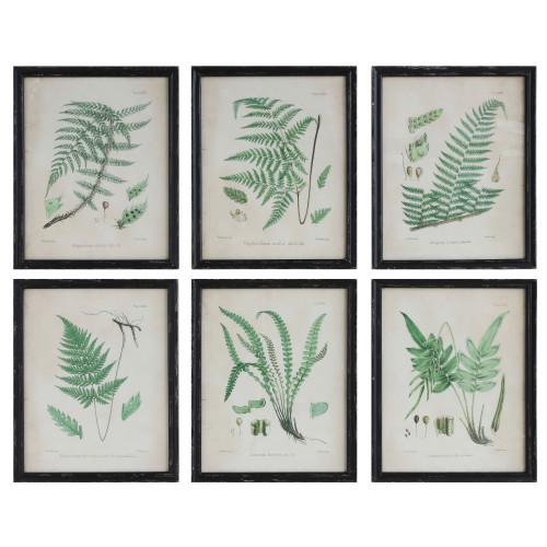 Set of 6 Fern Prints