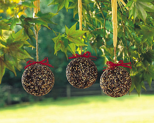 Seed & Nut Ornaments