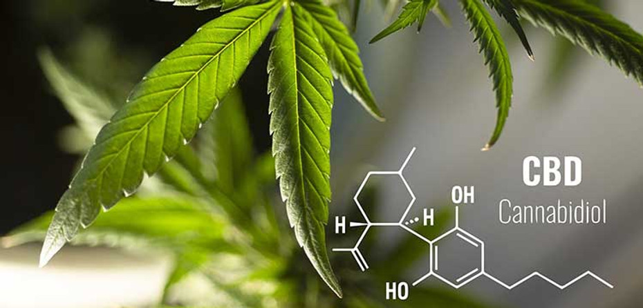 Everything You Need To Know About CBD (2020)