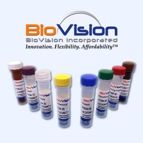 Maltose Binding Protein - Tag (MBP-Tag) Antibody (Clone 17D07)