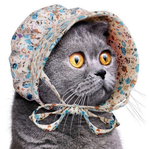 Accoutrements Cat Bonnet 26556