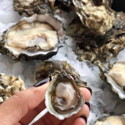 Olympia Oysters (30 pcs)