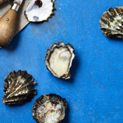 Sumo Kumo Oysters