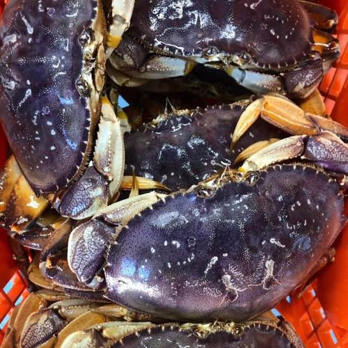 Live Dungeness Crab (per crab)