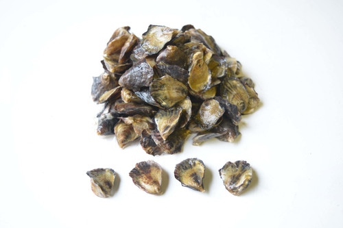 Olympia Oyster Seed