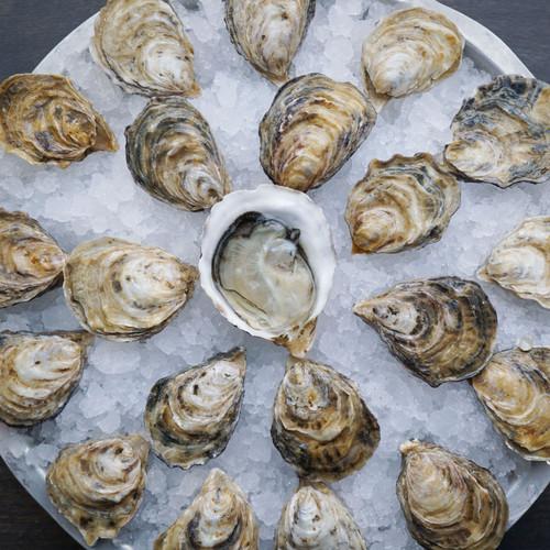 Kusshi Oysters (30 pcs)