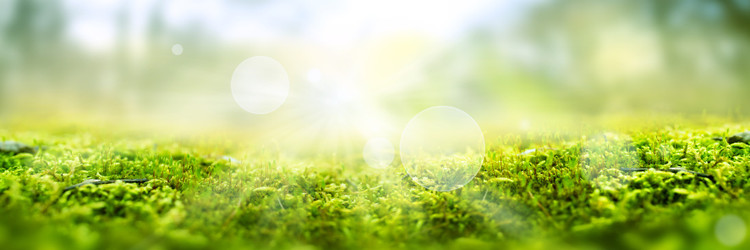 5 Steps for a more Eco Friendly lifestyle