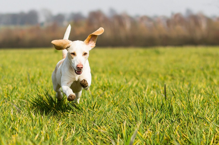 Does my pet need supplements?