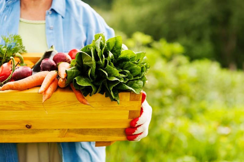 Veg out … it's National Vegetarian Week