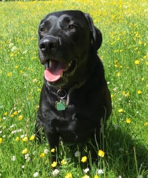 Photo of Jenson (dog)