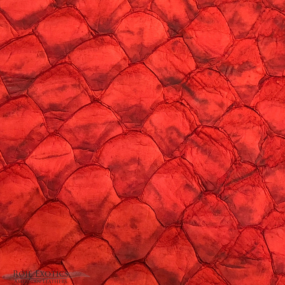11d86e29ed3 Pirarucu ( Arapaima) Red Matte - XL