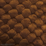 Pirarucu ( Arapaima)  Chocolate Matte -  XL