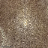 Stingray - Medium Brown - Shagreen - Sanded & Polished