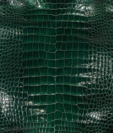"American Alligator - Belly - Forrest Green - ""Classic"" Glazed"