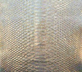 Short Tail Python BC - Silver Hologram