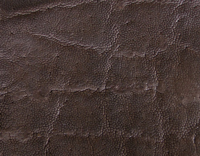 Genuine Elephant Skin - Matte Finish in Nicotine