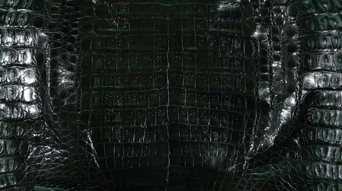 Caiman Belly Skin - Glazed - Forest Green (38 cm)