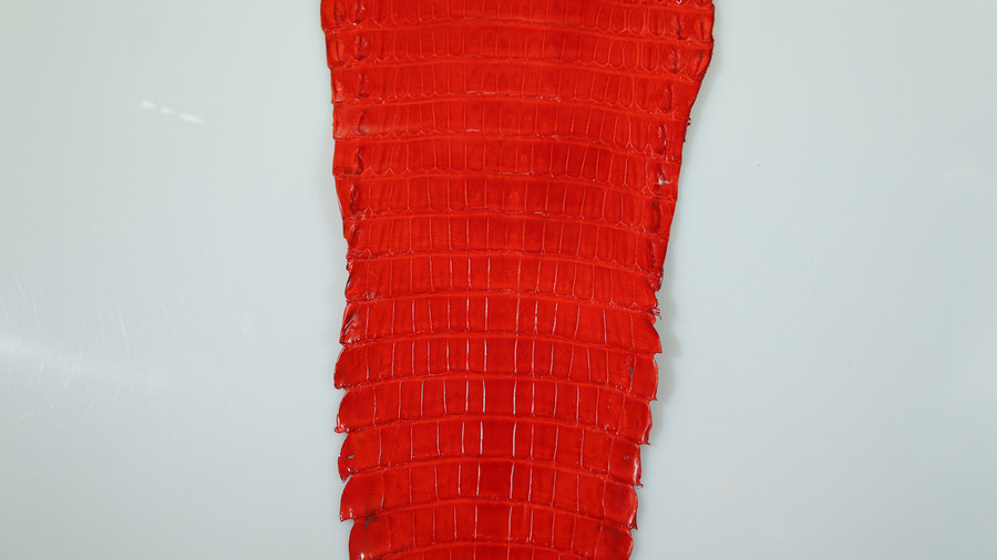 Caiman Belly Skin - Glazed - Red (38cm)