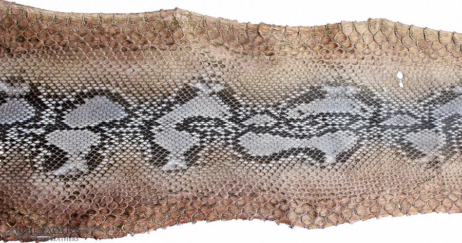Python Front Cut  - HandPainted - (17E08-A)