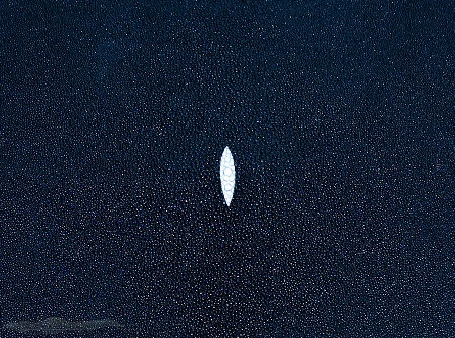Stingray Skin - Navy - Caviar Finish