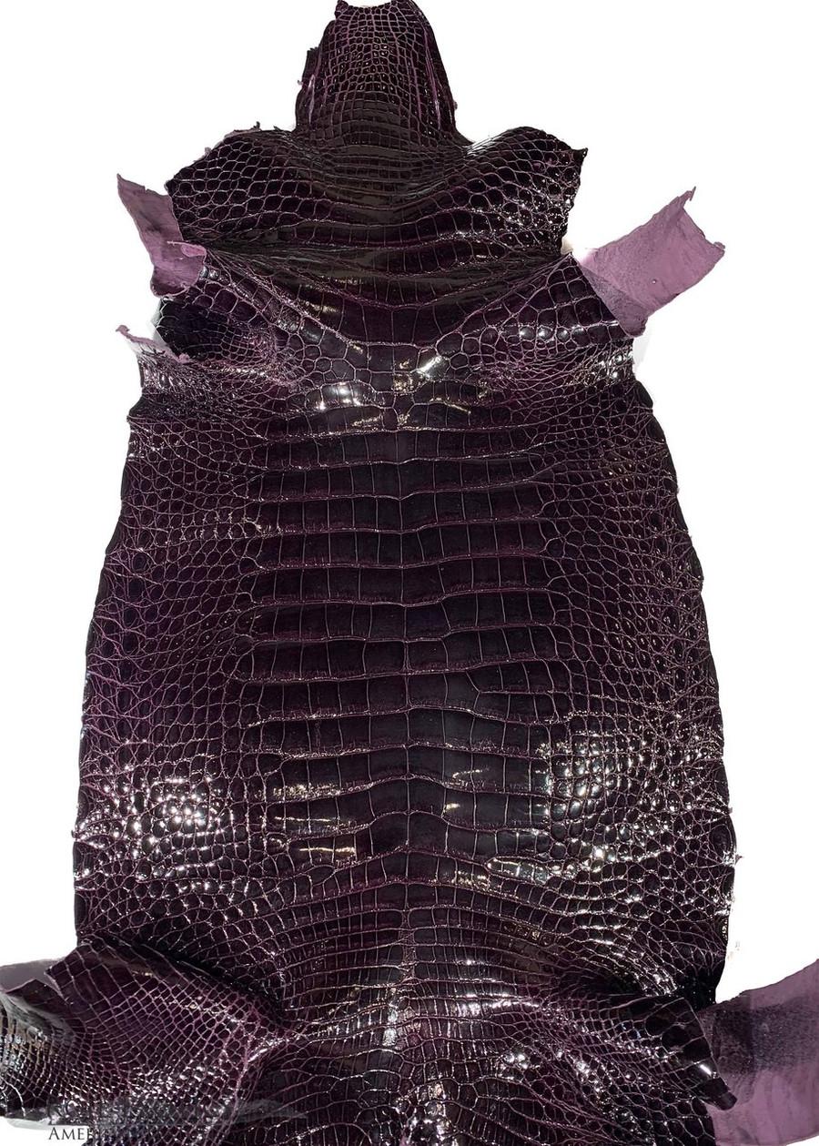 "American Alligator - Belly -  Aubergine- ""Classic"" Glazed"