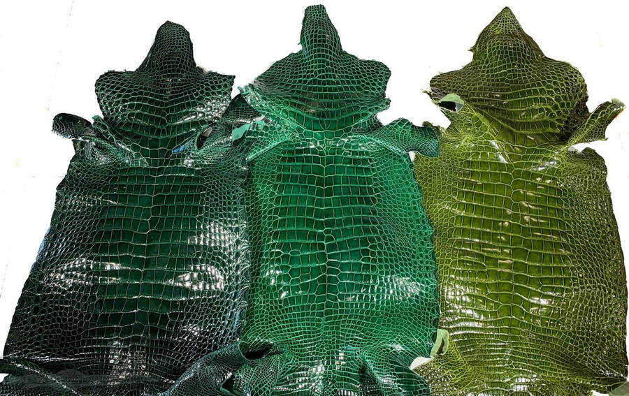 "American Alligator - Belly - Emerald Green - ""Classic"" Glazed 40-44cm"