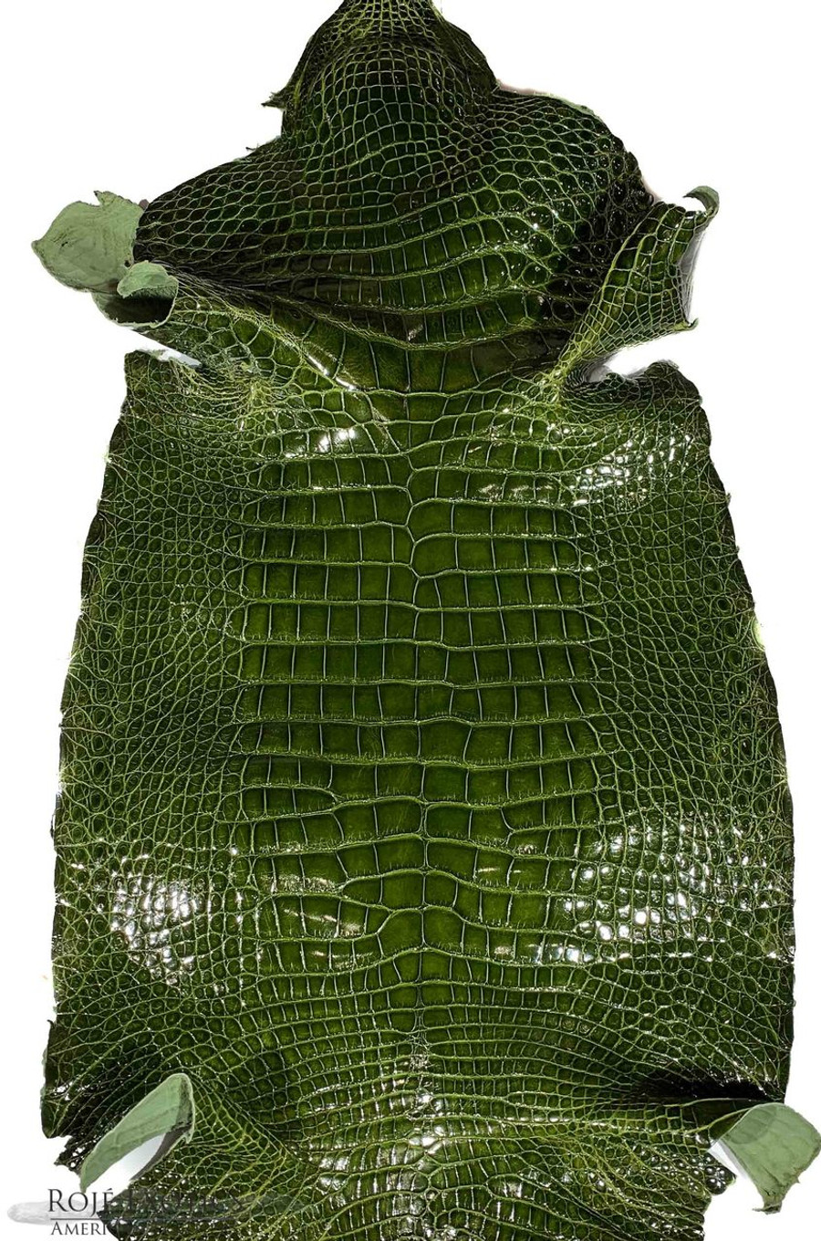 "American Alligator - Belly - Olive Green - ""Classic"" Glazed"
