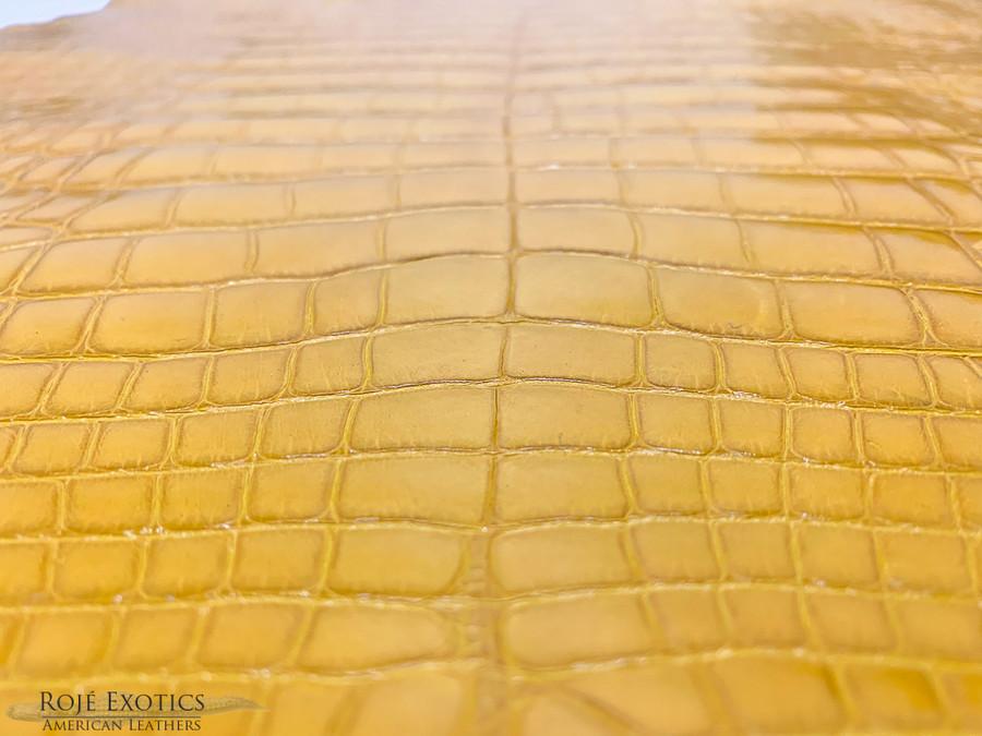 American Alligator - Belly - Saffron Yellow - Millennium