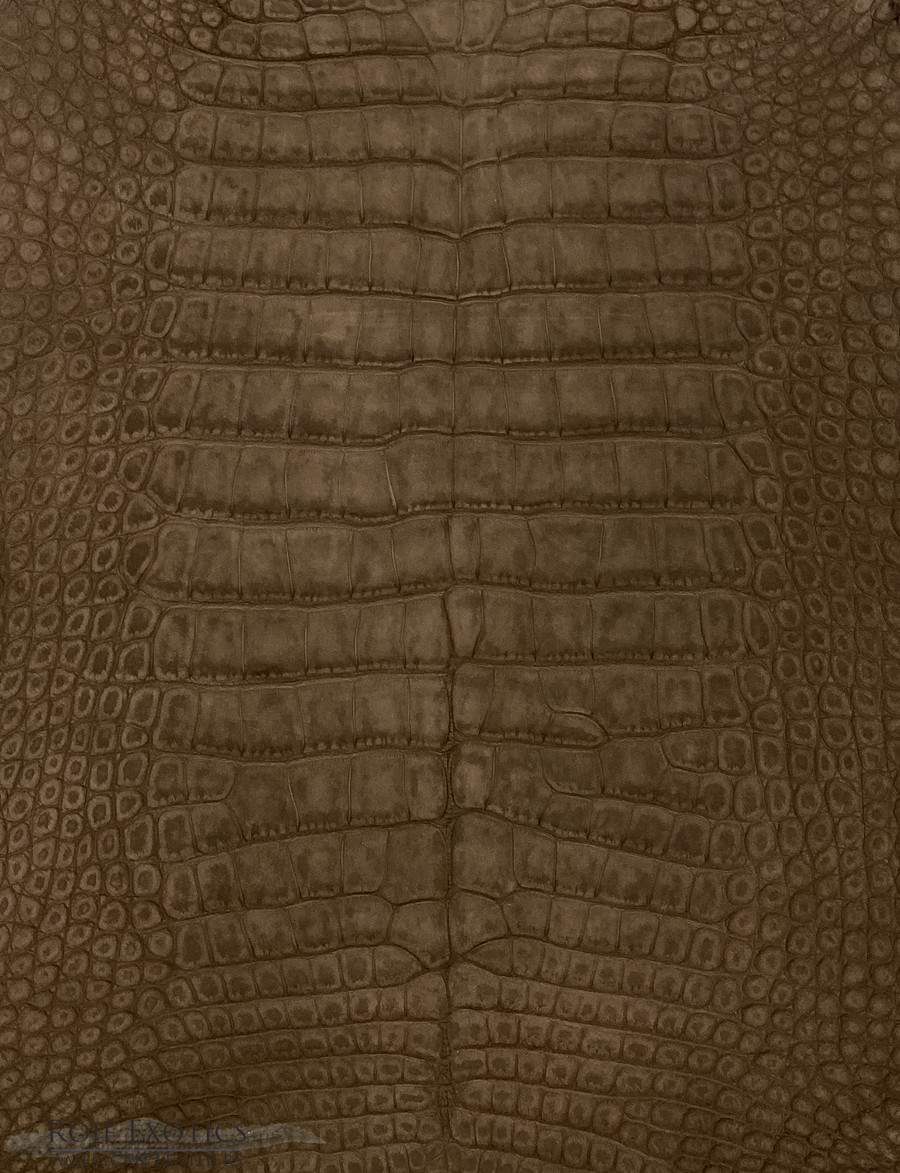 "American Alligator - Belly -  ""Suede"" - Chocolate"