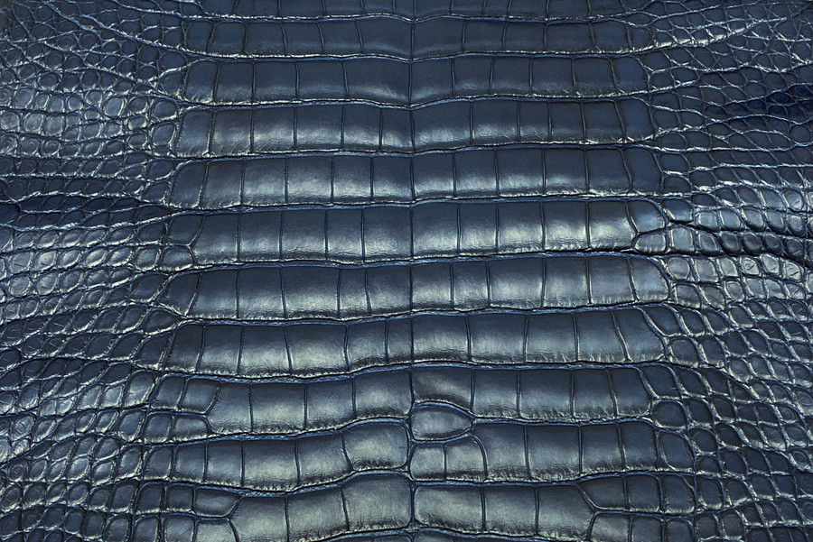 American Alligator - Belly -  Matte - Navy Blue