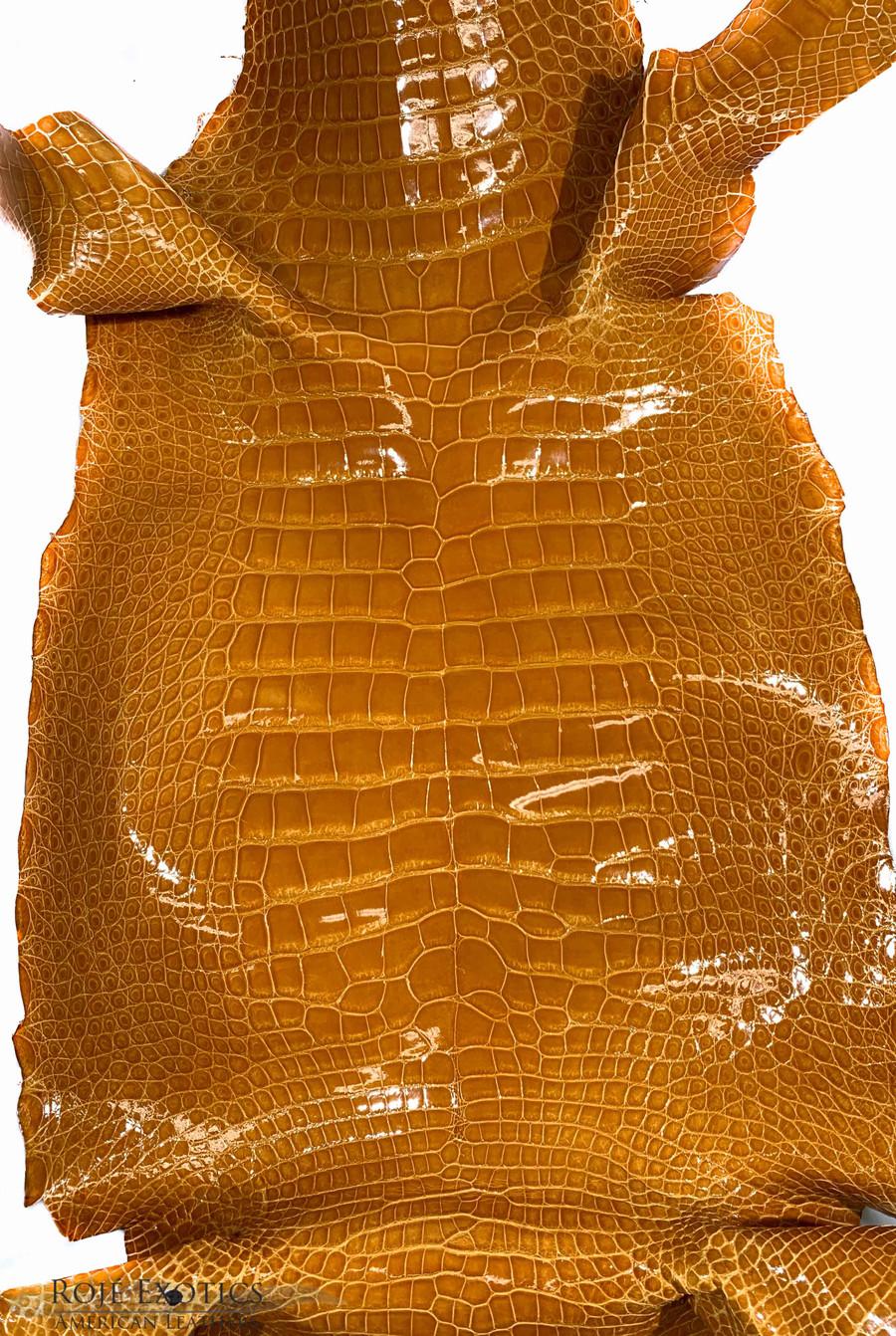 "American Alligator - Belly - Mustard - ""Classic"" Glazed"