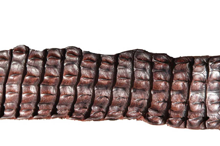 Nile Crocodile Backstrap  - Chocolate Brown