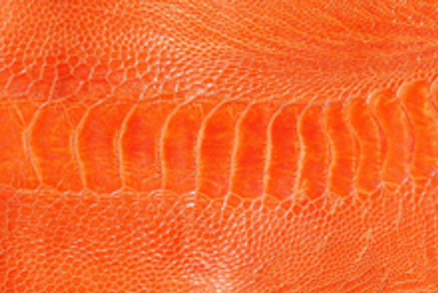 Genuine Ostrich Leg  - Glazed Finish in Tangerine