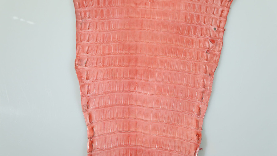 Caiman Belly Skin - Glazed - Indian Pink (38cm)