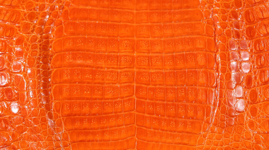 Caiman Belly Skin - Glazed - Tangerine (38 cm)