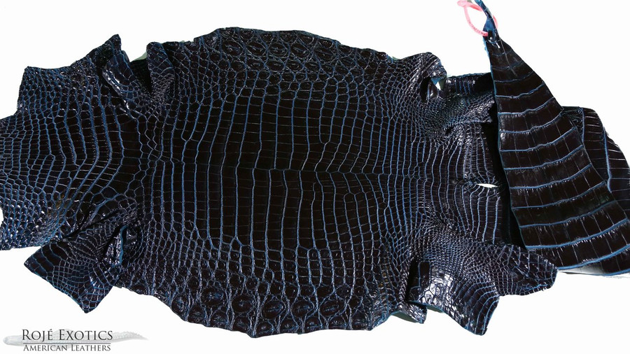 Nile Crocodile Belly -  Navy Two Tone