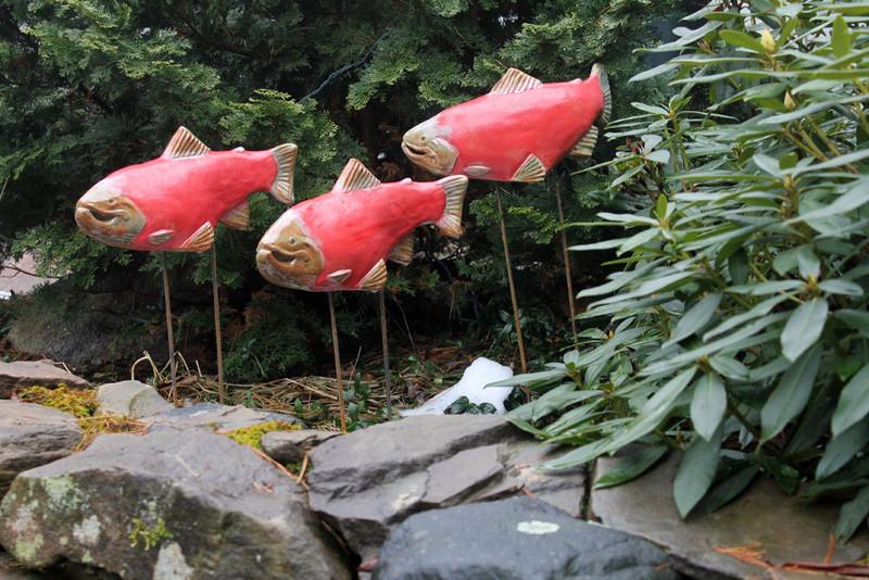 Sockeye Salmon 2nds