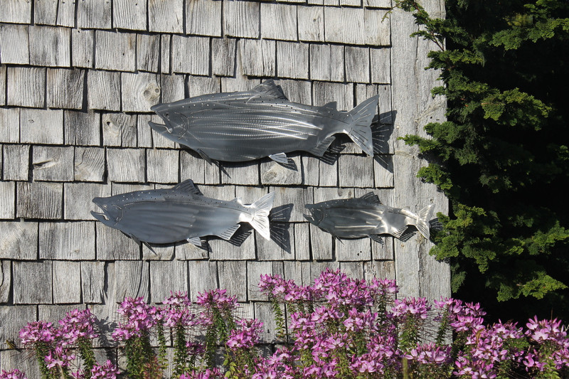 Three Stainless Steel Salmon For Walls
