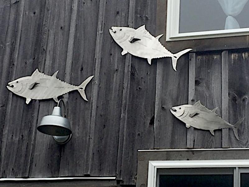 "23"" Tuna"