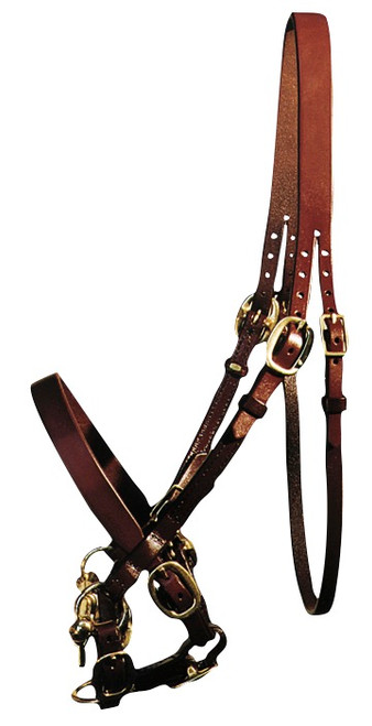 Yearling Show Bridle