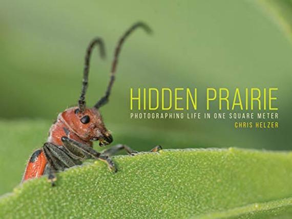 Hidden Prairie: Photographing Life in One Square Meter (Bur Oak Book)