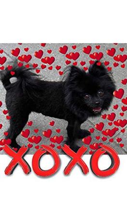 Valentine's all Love xoxo Pomeranian creative blank journal