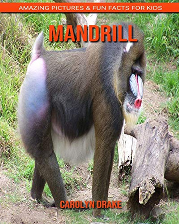 Mandrill: Amazing Pictures & Fun Facts for Kids