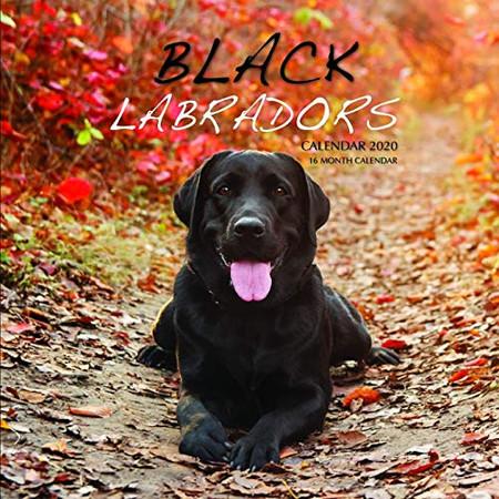 Black Labradors Calendar 2020: 16 Month Calendar